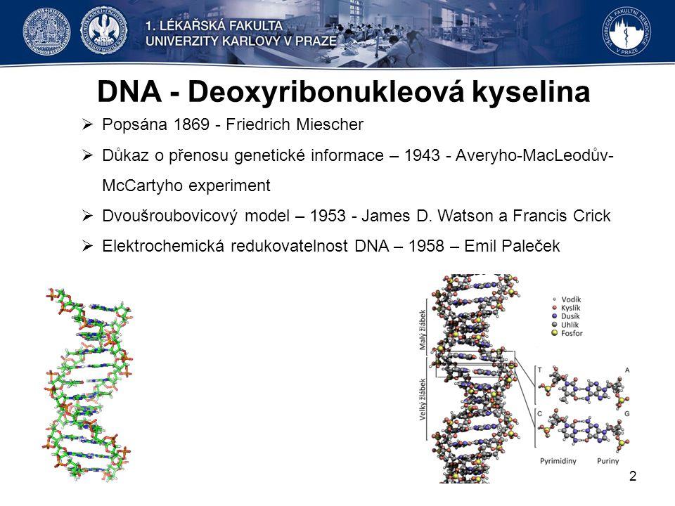 DNA - Deoxyribonukleová kyselina