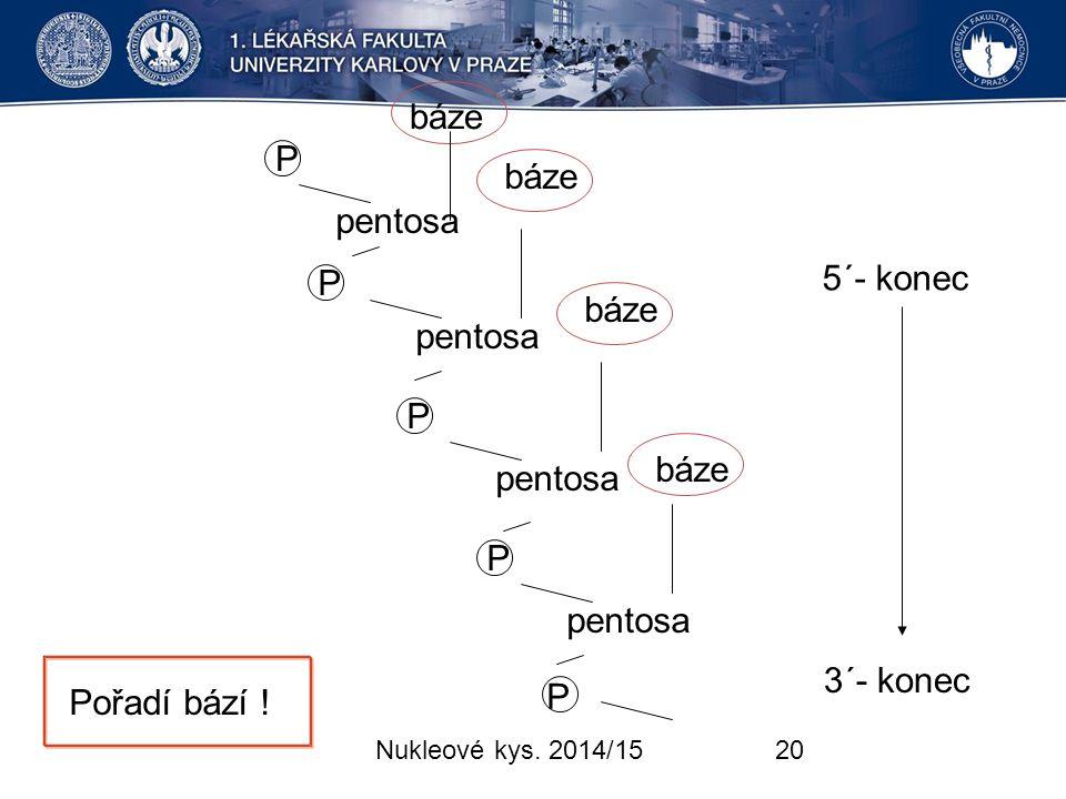 pentosa báze P 5´- konec 3´- konec Pořadí bází ! Nukleové kys. 2014/15