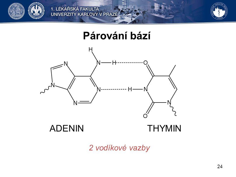 Párování bází ADENIN THYMIN 2 vodíkové vazby