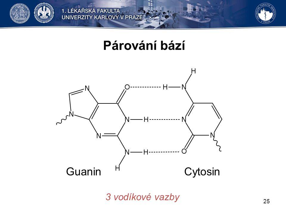 Párování bází Guanin Cytosin 3 vodíkové vazby