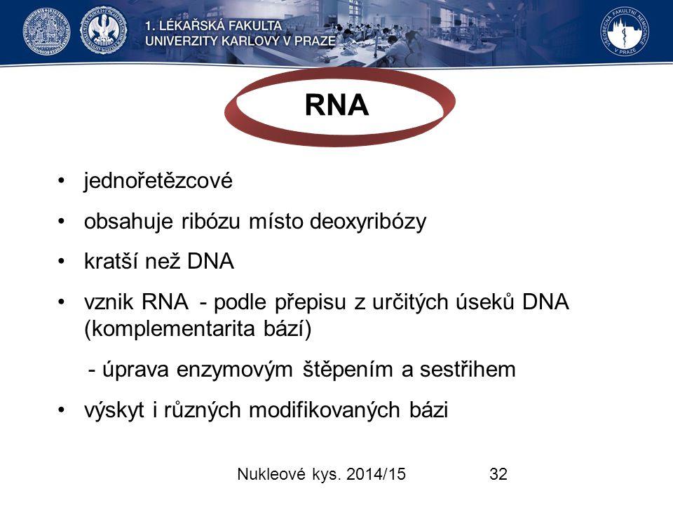 RNA • jednořetězcové obsahuje ribózu místo deoxyribózy