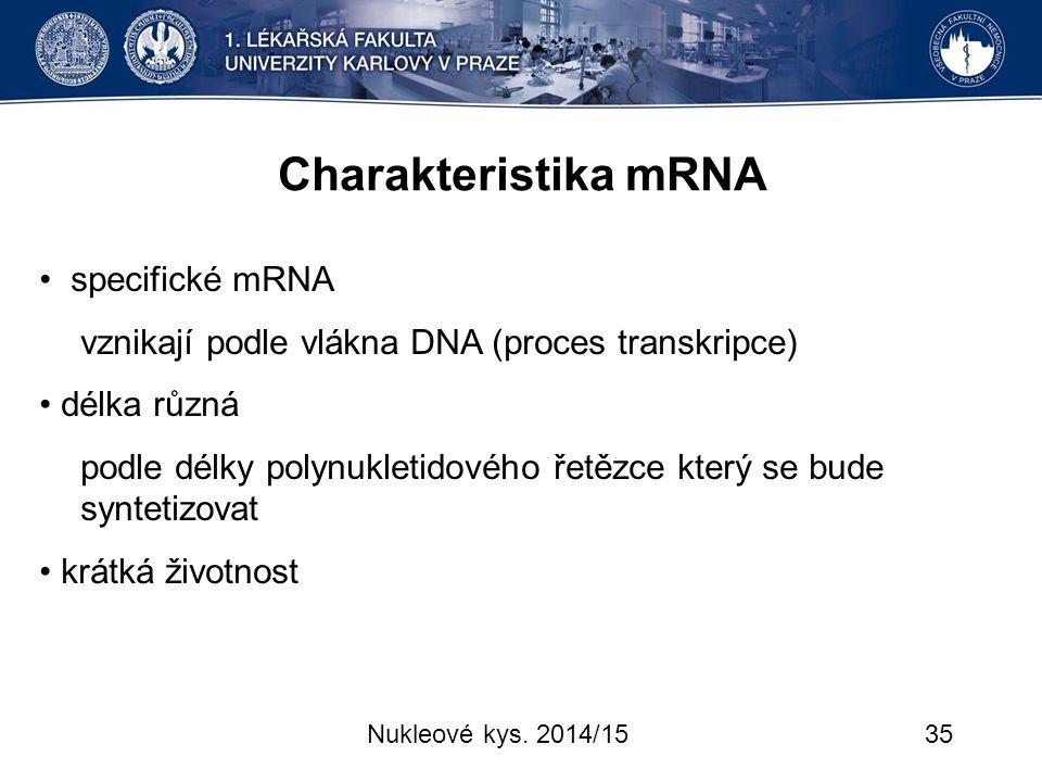 Charakteristika mRNA • specifické mRNA