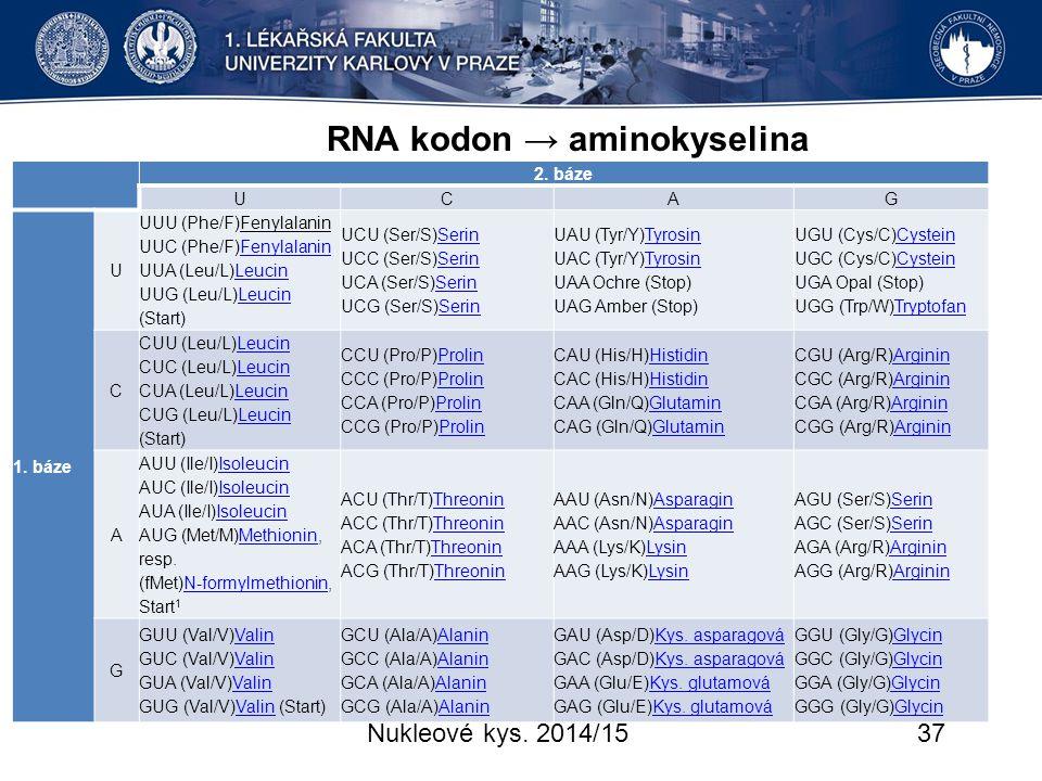 RNA kodon → aminokyselina
