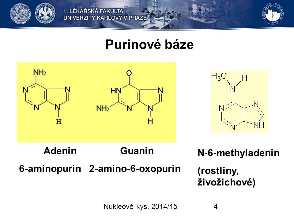 Purinové báze Adenin Guanin N-6-methyladenin