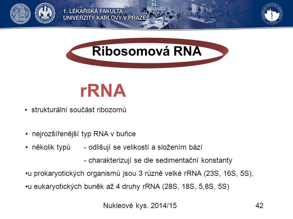 Ribosomová RNA rRNA • strukturální součást ribozomů