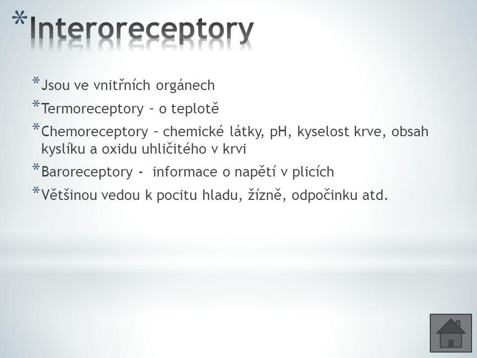 Interoreceptory Jsou ve vnitřních orgánech Termoreceptory – o teplotě