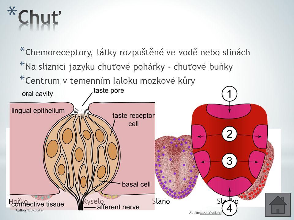 Chuť Chemoreceptory, látky rozpuštěné ve vodě nebo slinách
