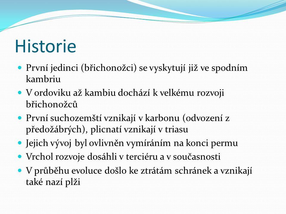 Historie První jedinci (břichonožci) se vyskytují již ve spodním kambriu. V ordoviku až kambiu dochází k velkému rozvoji břichonožců.