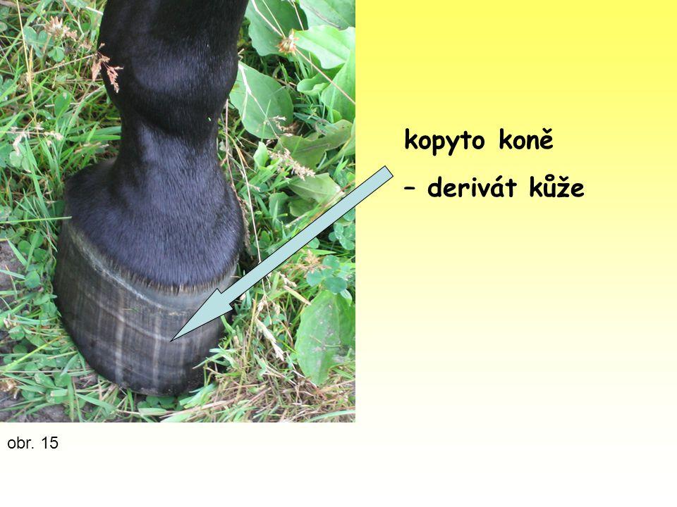 kopyto koně – derivát kůže obr. 15