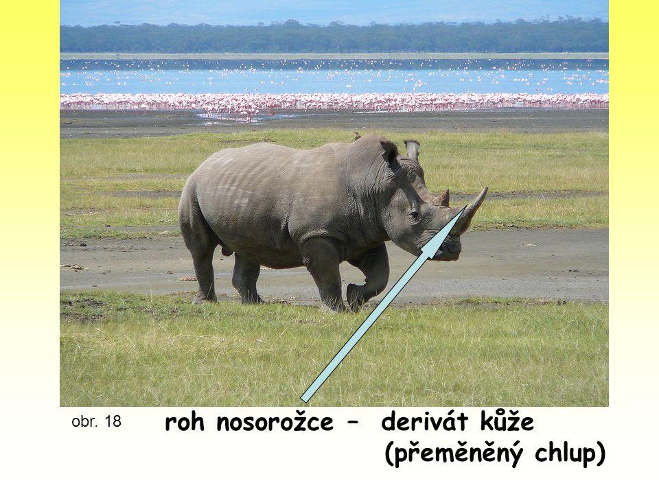 roh nosorožce – derivát kůže (přeměněný chlup)