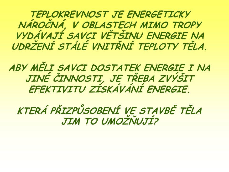 TEPLOKREVNOST JE ENERGETICKY NÁROČNÁ, V OBLASTECH MIMO TROPY VYDÁVAJÍ SAVCI VĚTŠINU ENERGIE NA UDRŽENÍ STÁLÉ VNITŘNÍ TEPLOTY TĚLA.