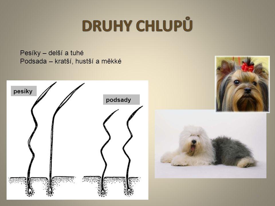 DRUHY CHLUPŮ Pesíky – delší a tuhé Podsada – kratší, hustší a měkké