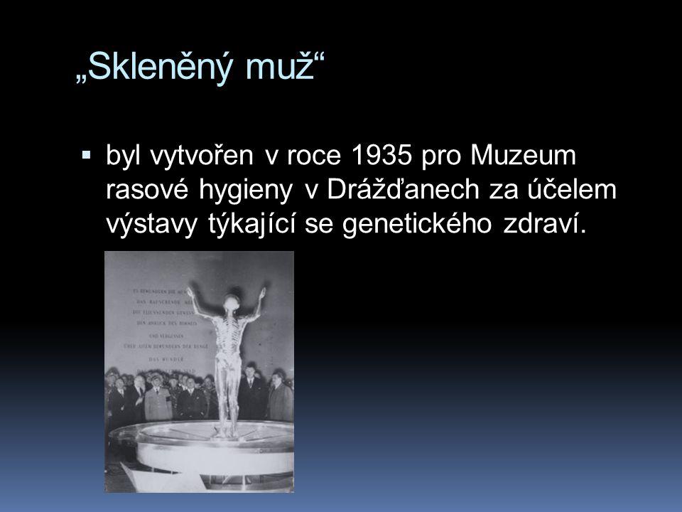 """""""Skleněný muž byl vytvořen v roce 1935 pro Muzeum rasové hygieny v Drážďanech za účelem výstavy týkající se genetického zdraví."""