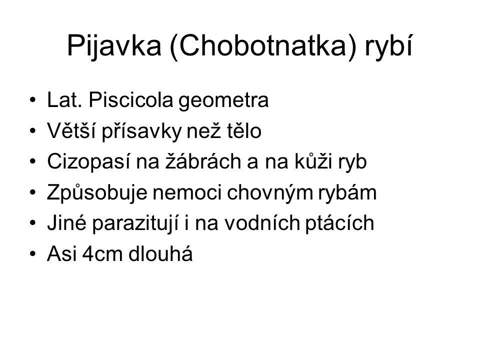 Pijavka (Chobotnatka) rybí