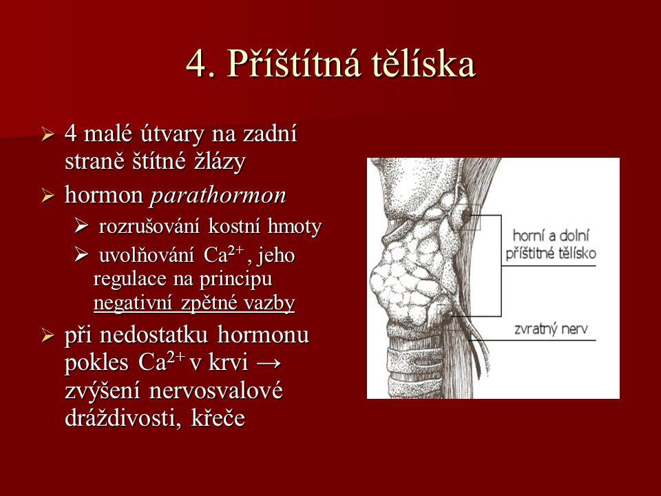 4. Příštítná tělíska 4 malé útvary na zadní straně štítné žlázy