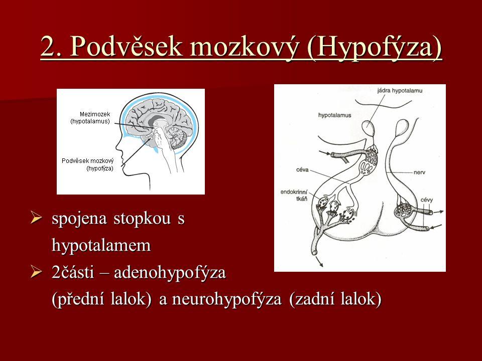 2. Podvěsek mozkový (Hypofýza)