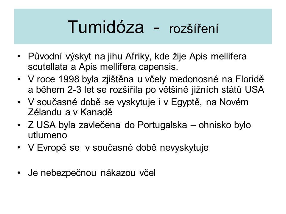 Tumidóza - rozšíření Původní výskyt na jihu Afriky, kde žije Apis mellifera scutellata a Apis mellifera capensis.