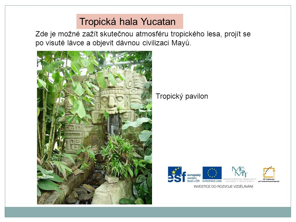Tropická hala Yucatan Zde je možné zažít skutečnou atmosféru tropického lesa, projít se po visuté lávce a objevit dávnou civilizaci Mayů.