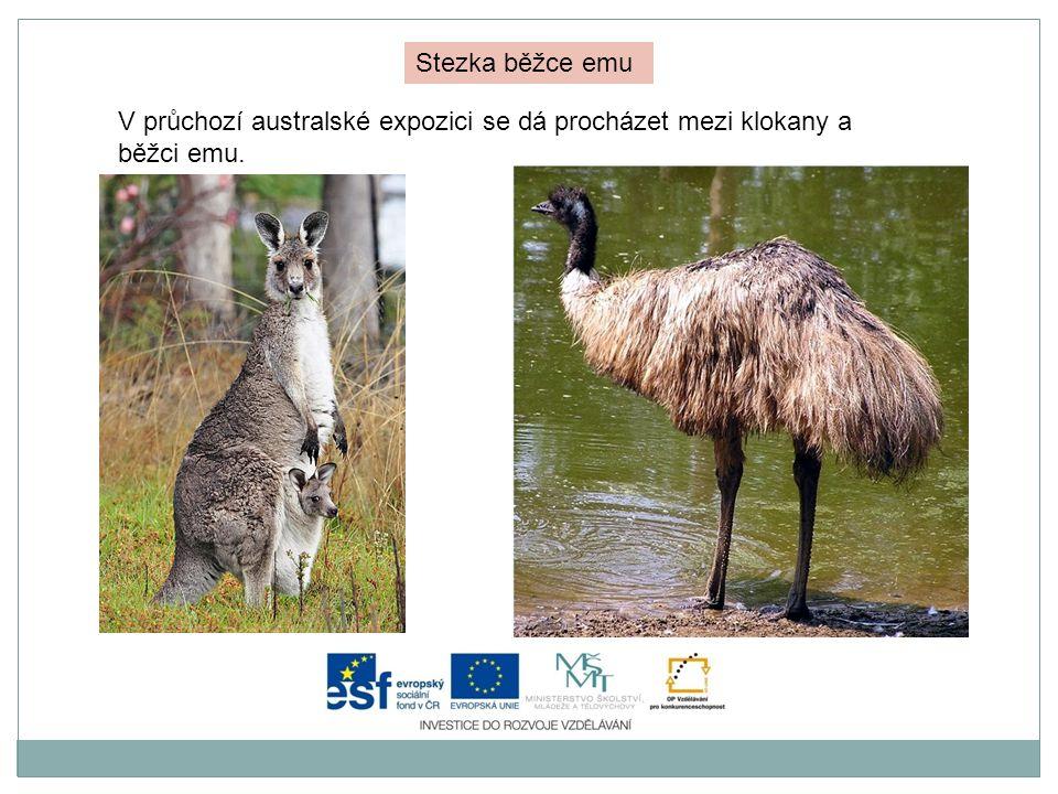 Stezka běžce emu V průchozí australské expozici se dá procházet mezi klokany a běžci emu.