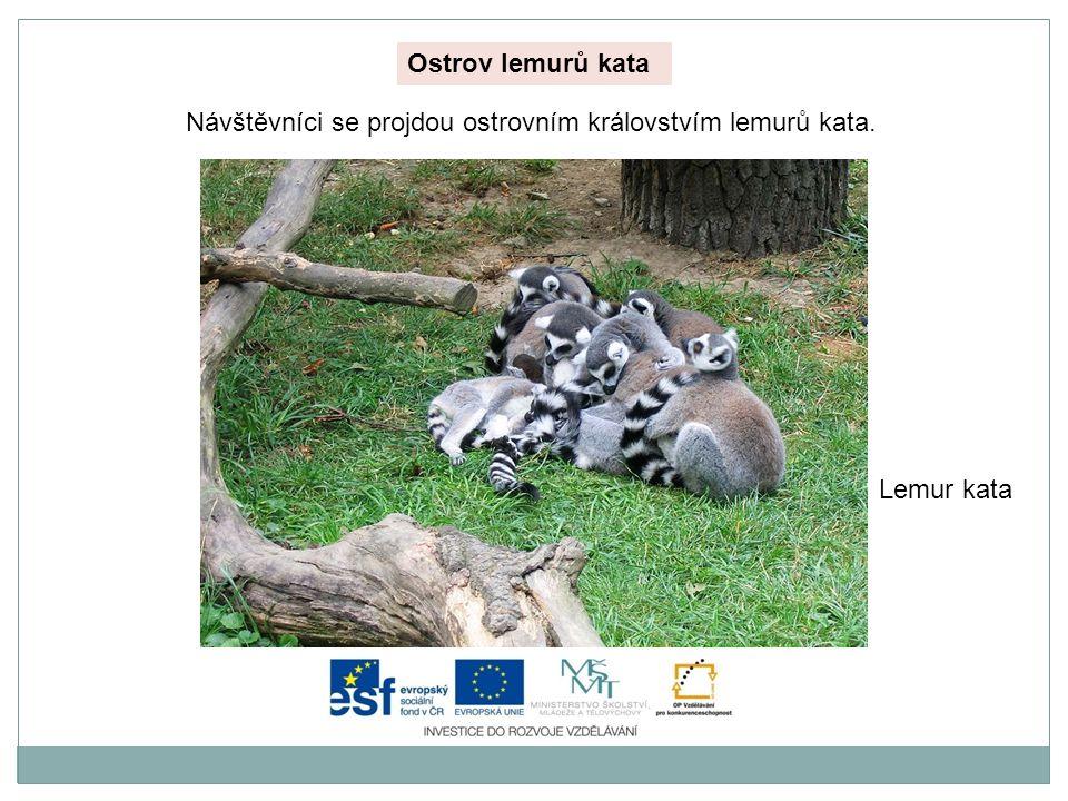 Ostrov lemurů kata Návštěvníci se projdou ostrovním královstvím lemurů kata. Lemur kata