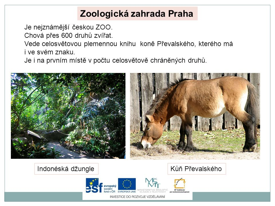 Zoologická zahrada Praha