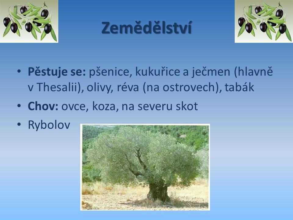 Zemědělství Pěstuje se: pšenice, kukuřice a ječmen (hlavně v Thesalii), olivy, réva (na ostrovech), tabák.