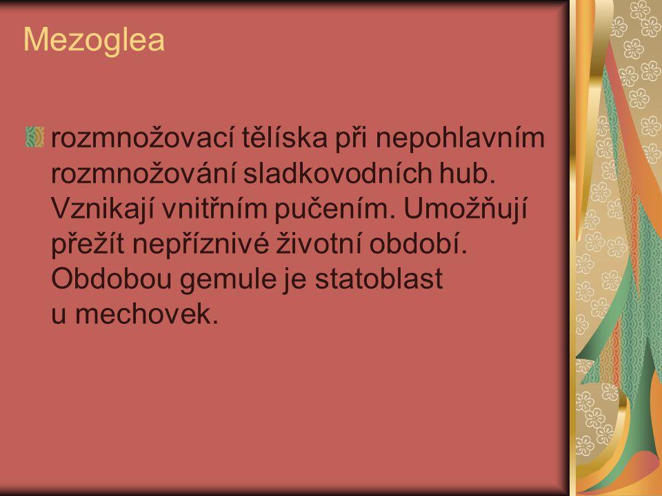 Mezoglea