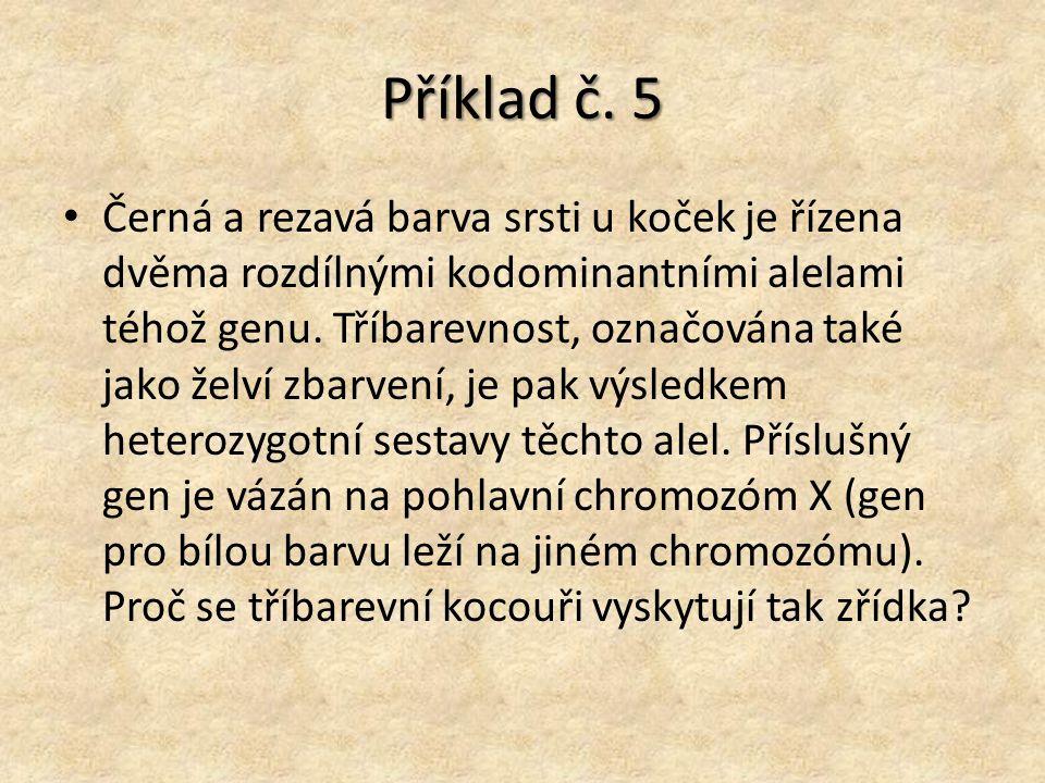 Příklad č. 5