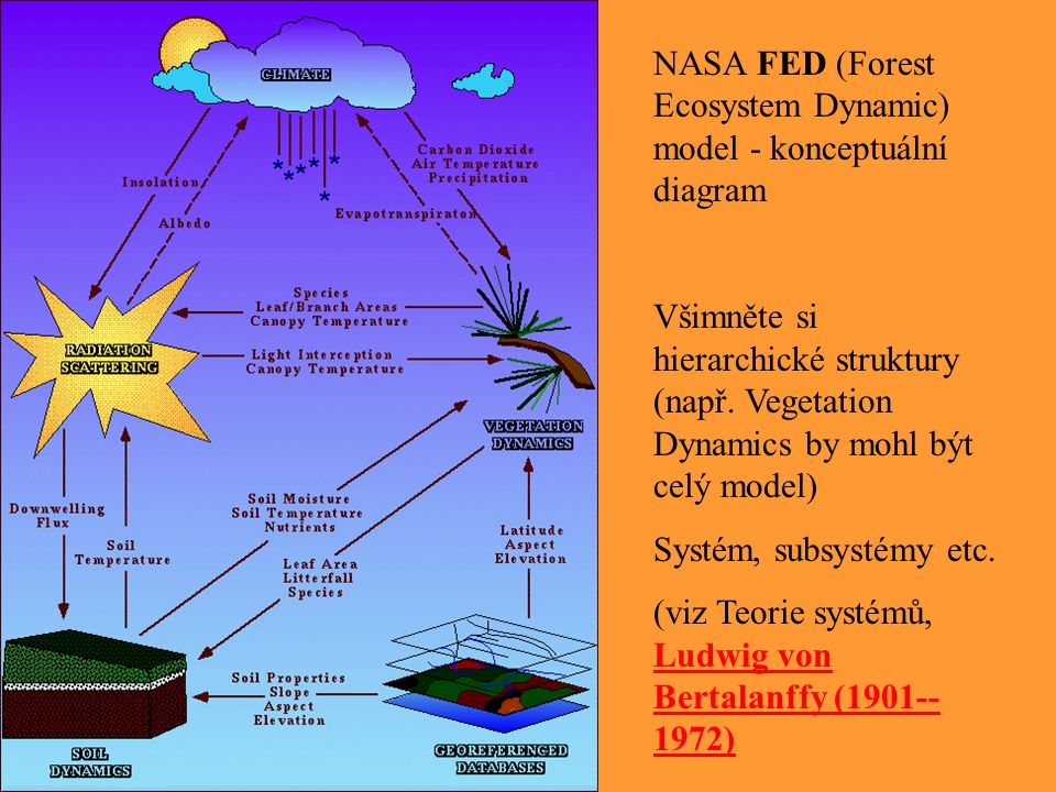 NASA FED (Forest Ecosystem Dynamic) model - konceptuální diagram