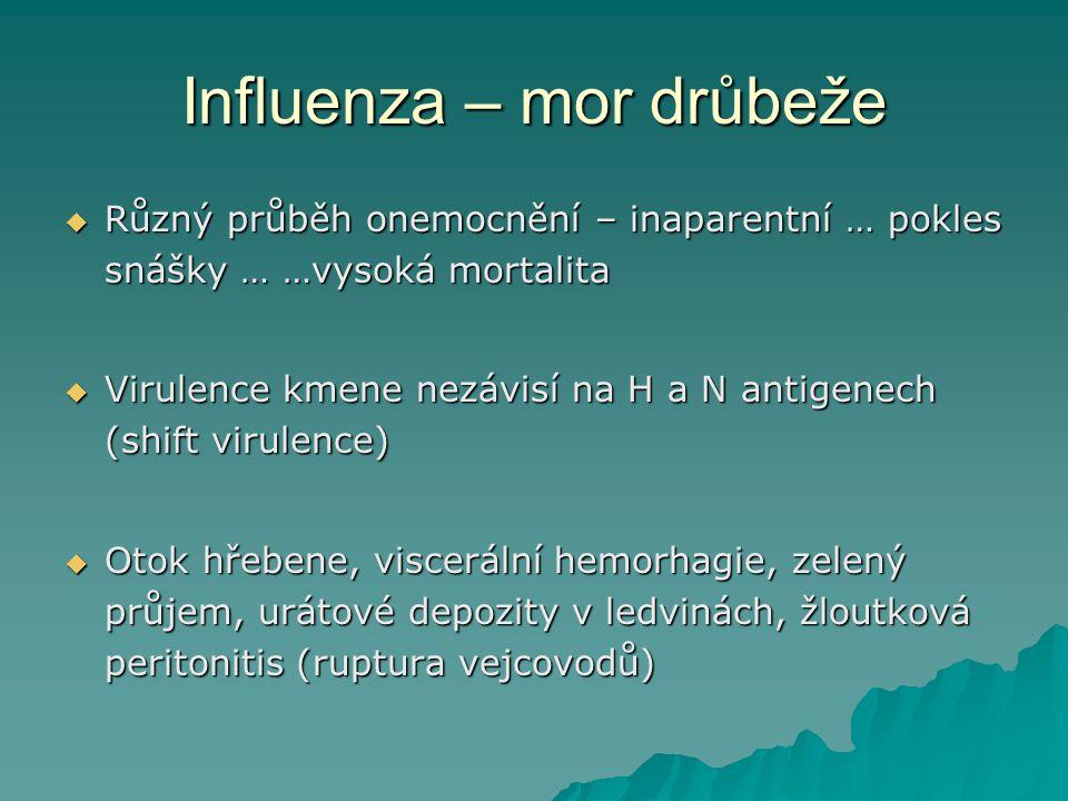 Influenza – mor drůbeže
