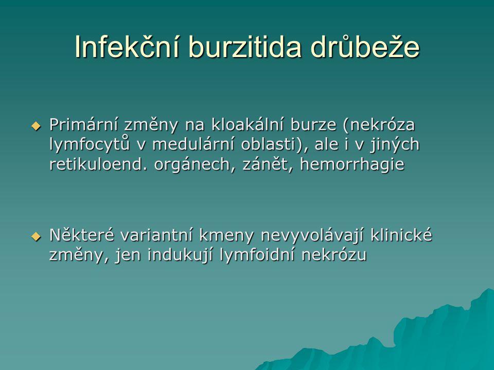 Infekční burzitida drůbeže
