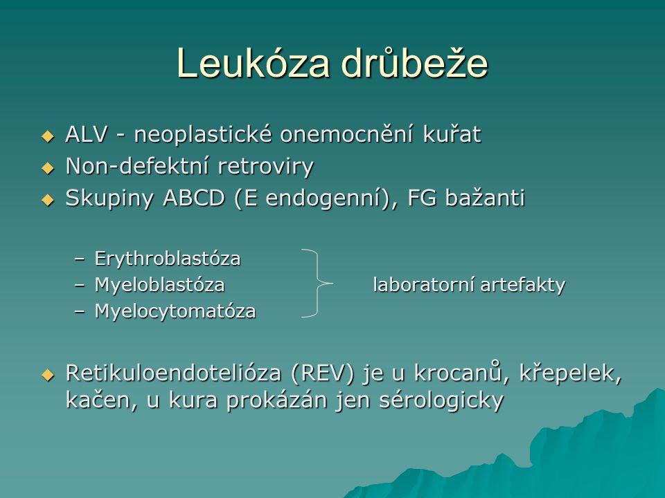 Leukóza drůbeže ALV - neoplastické onemocnění kuřat