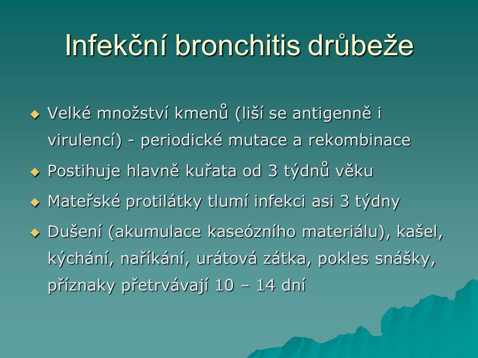 Infekční bronchitis drůbeže