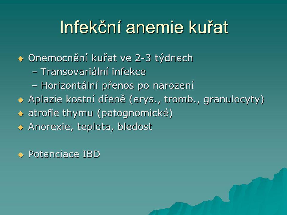 Infekční anemie kuřat Onemocnění kuřat ve 2-3 týdnech