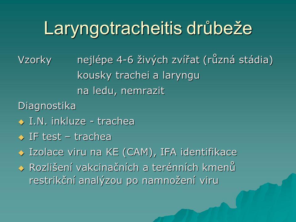 Laryngotracheitis drůbeže