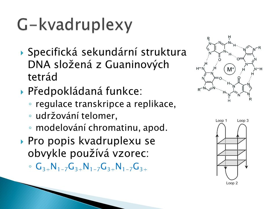 G-kvadruplexy Specifická sekundární struktura DNA složená z Guaninových tetrád. Předpokládaná funkce: