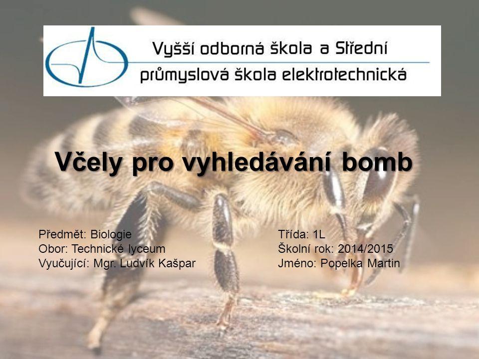 Včely pro vyhledávání bomb