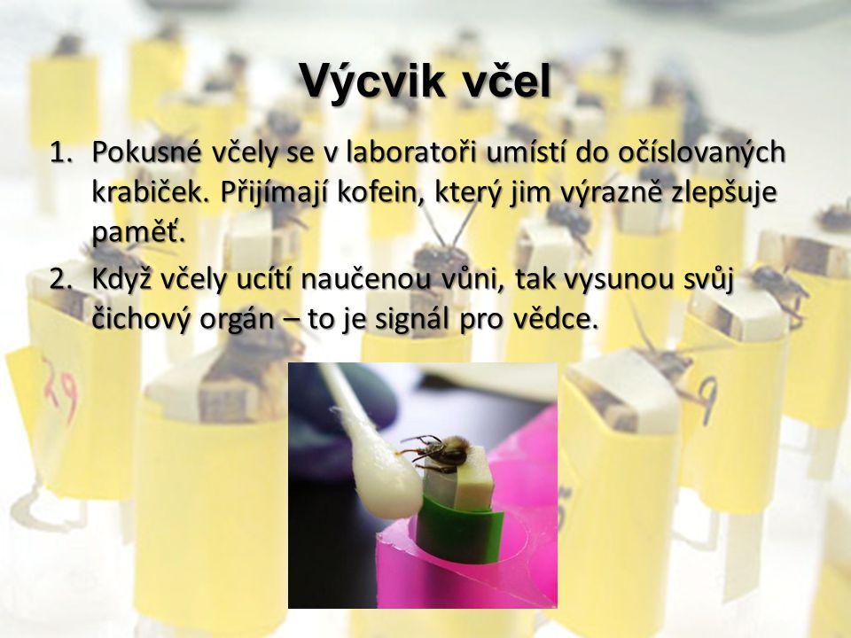 Výcvik včel Pokusné včely se v laboratoři umístí do očíslovaných krabiček. Přijímají kofein, který jim výrazně zlepšuje paměť.