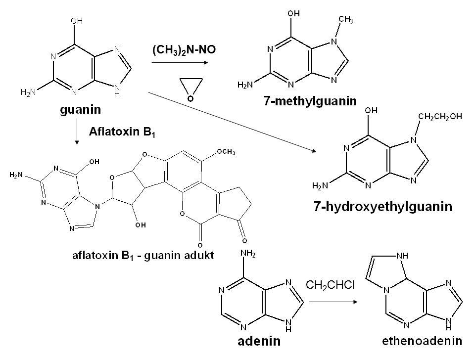 (CH3)2N-NO Aflatoxin B1 CH2CHCl