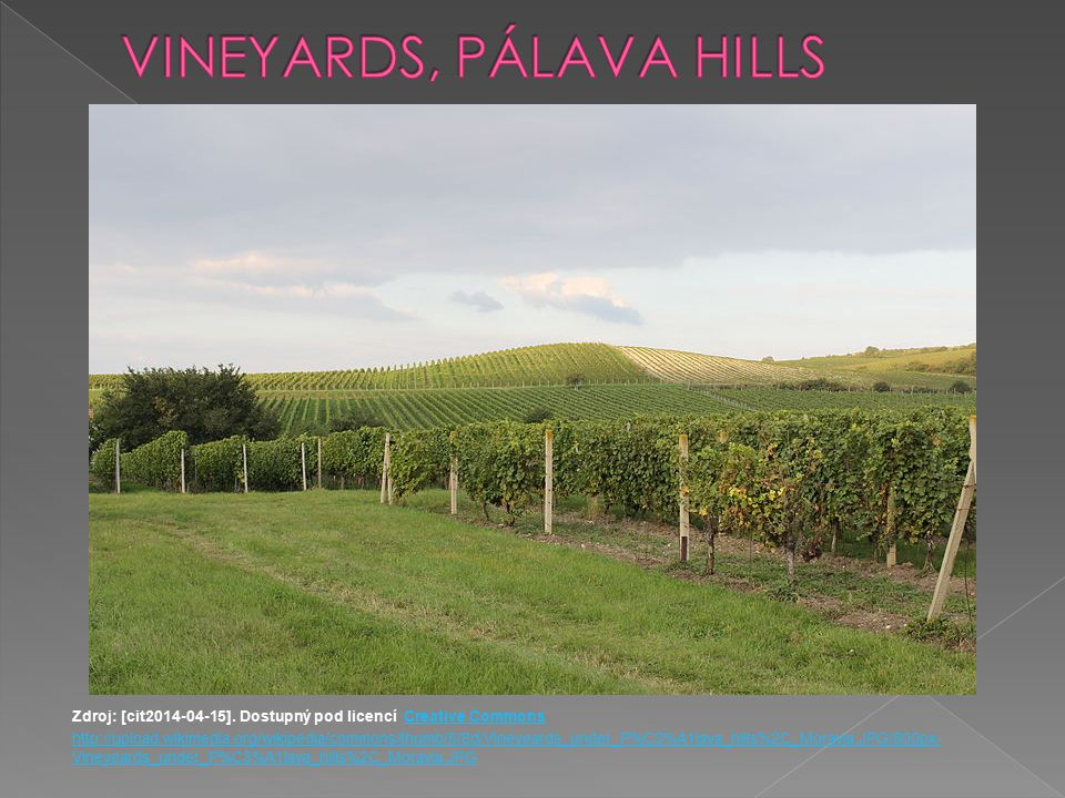 VINEYARDS, PÁLAVA HILLS