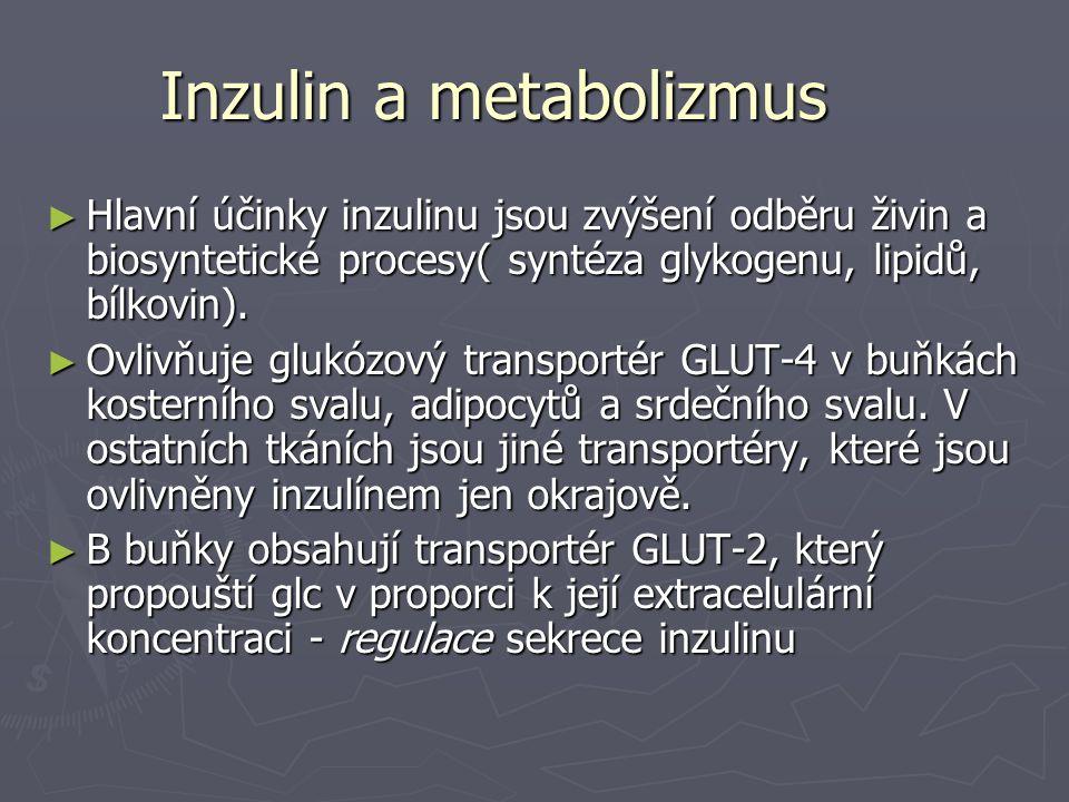 Inzulin a metabolizmus