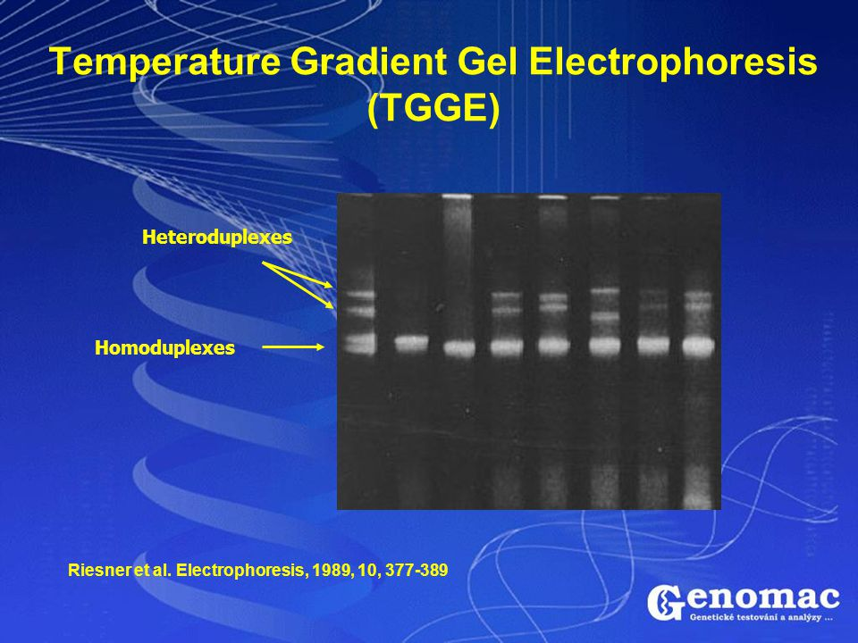 Temperature Gradient Gel Electrophoresis (TGGE)