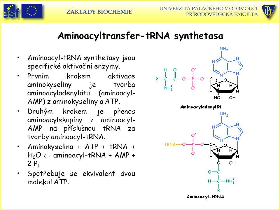 Aminoacyltransfer-tRNA synthetasa