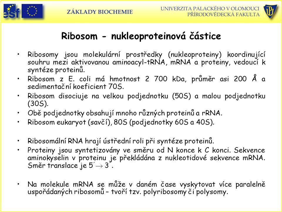 Ribosom - nukleoproteinová částice