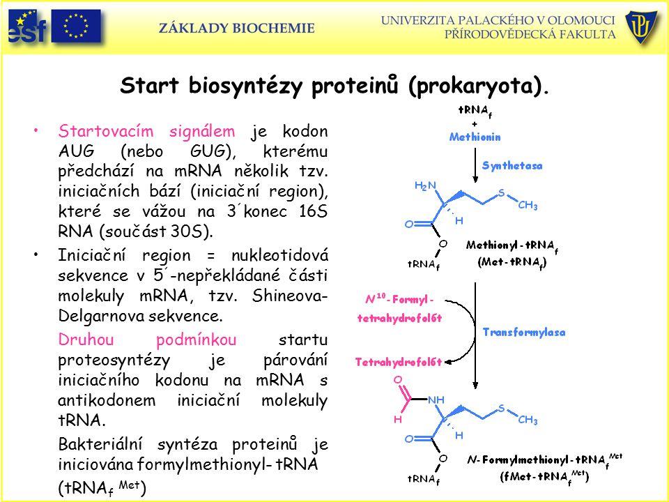 Start biosyntézy proteinů (prokaryota).