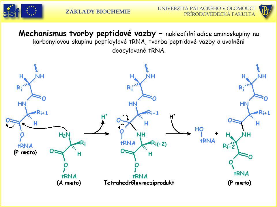 Mechanismus tvorby peptidové vazby – nukleofilní adice aminoskupiny na karbonylovou skupinu peptidylové tRNA, tvorba peptidové vazby a uvolnění deacylované tRNA.