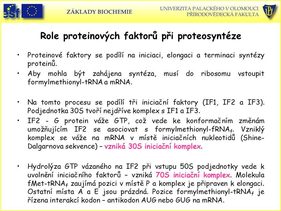 Role proteinových faktorů při proteosyntéze