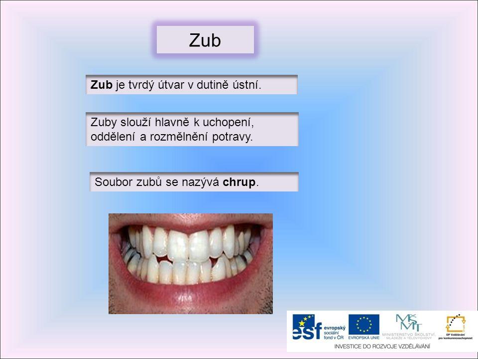 Zub Zub je tvrdý útvar v dutině ústní.