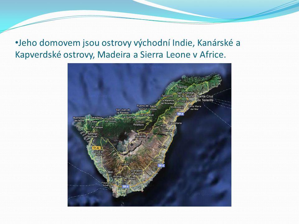 Jeho domovem jsou ostrovy východní Indie, Kanárské a Kapverdské ostrovy, Madeira a Sierra Leone v Africe.