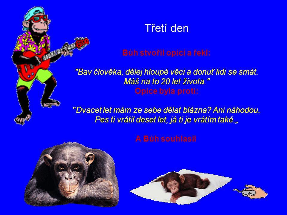Bůh stvořil opici a řekl: